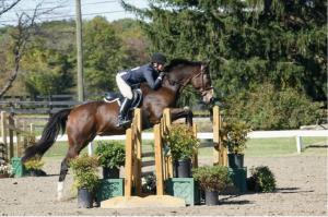 Horse Training in Virginia
