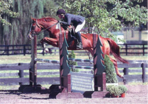 Hunter Jumper Specialist at Horse Show in Virginia