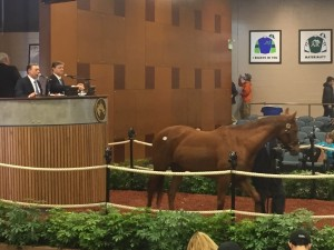 The final horse goes through the Fasig-Tipton Sale at Timonium. Nice mare.
